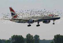 Photo of Bagaimana bila Pesawat Terbang Menabrak Burung?